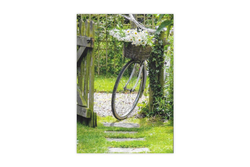Bicycle Basket of Daisies Bicycle Greeting Card
